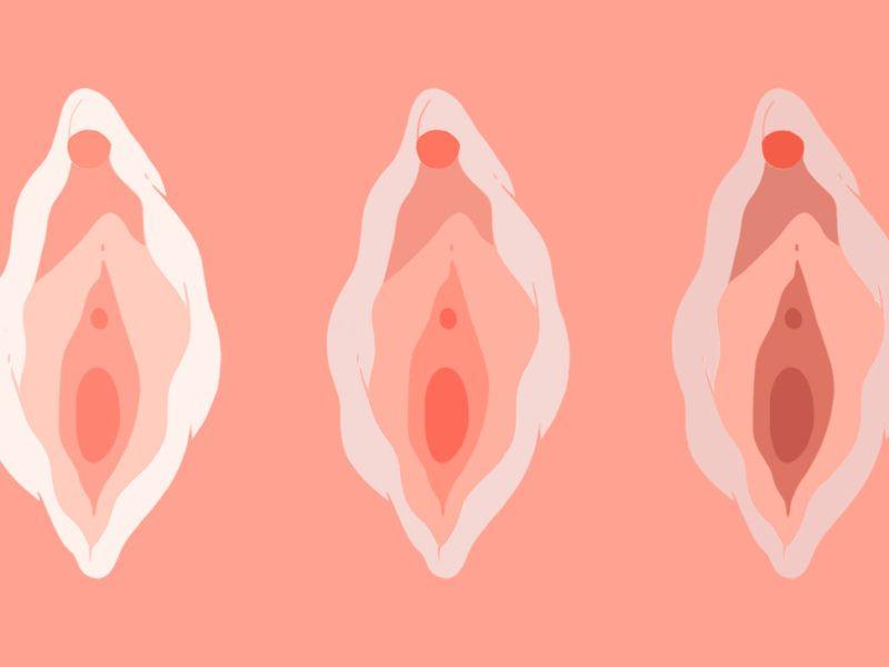Vulva: 5 cosas que no sabías